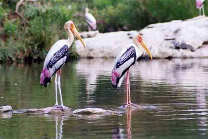 Bird Watching Tour Package of India