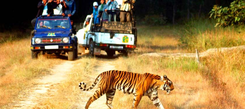 Safari at Corbett National Park