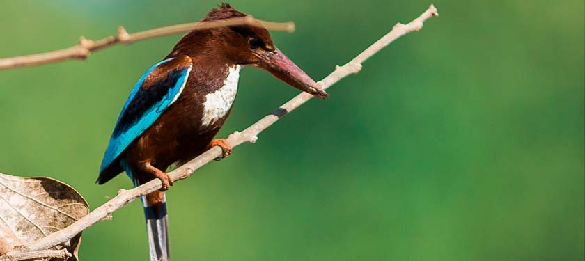 Bird Watching at Bandhavgarh
