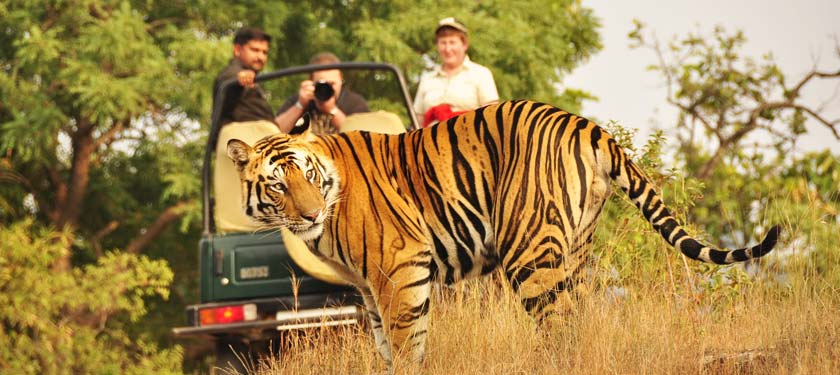 Jeep Safari at Bandhavgarh National Park