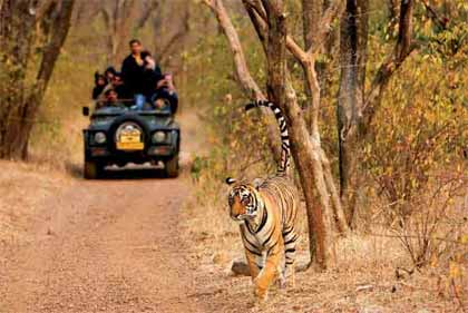 India Tiger Tour Package