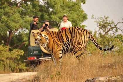 Bandhavgarh Wildlife Tour Package