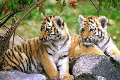 India Wildlife Tour Package