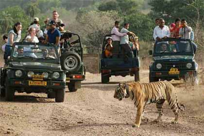 Ranthambore Wildlife Tour Package